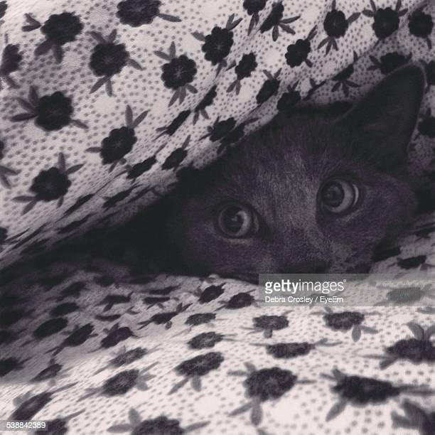 cat hiding under bed sheet - cat hiding under bed stock pictures, royalty-free photos & images