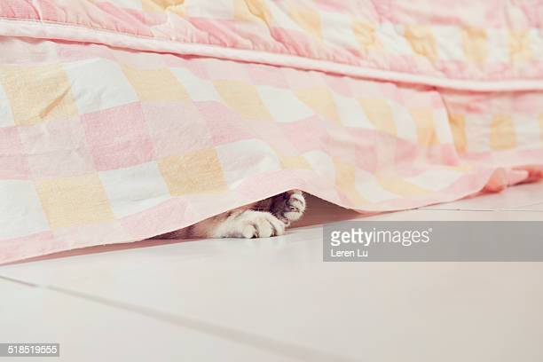 cat hiding under bed with claws out - cat hiding under bed stock pictures, royalty-free photos & images