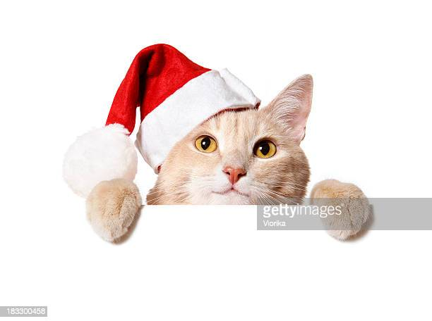 A cat holding a blank sign white wearing a Santa hat