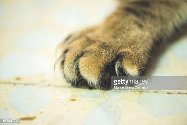 Cat hoof