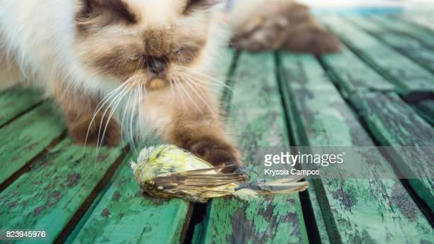 Cat hunts a small bird