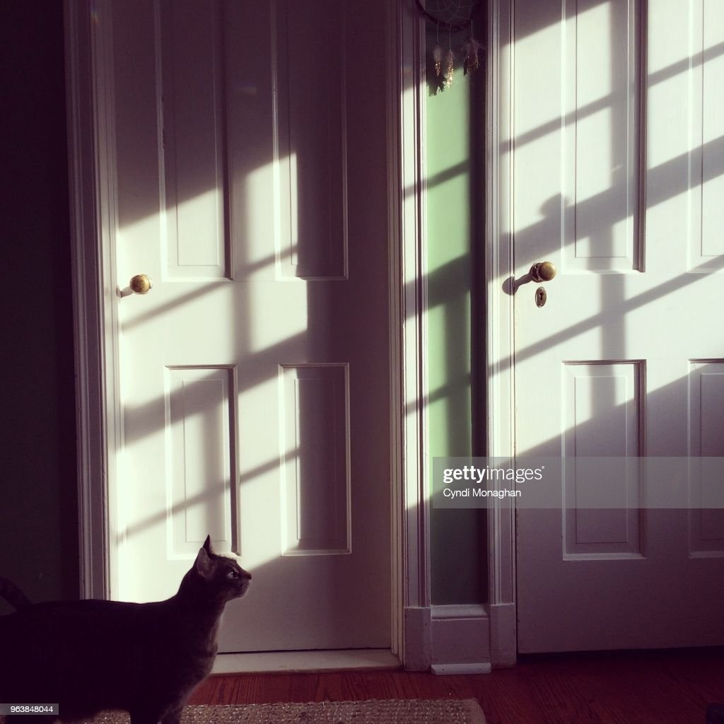 Profile of a cat silhouetted in sunlight streaming into a room with two doors.