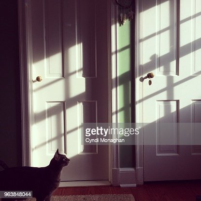 Cat Illuminated in Window Light