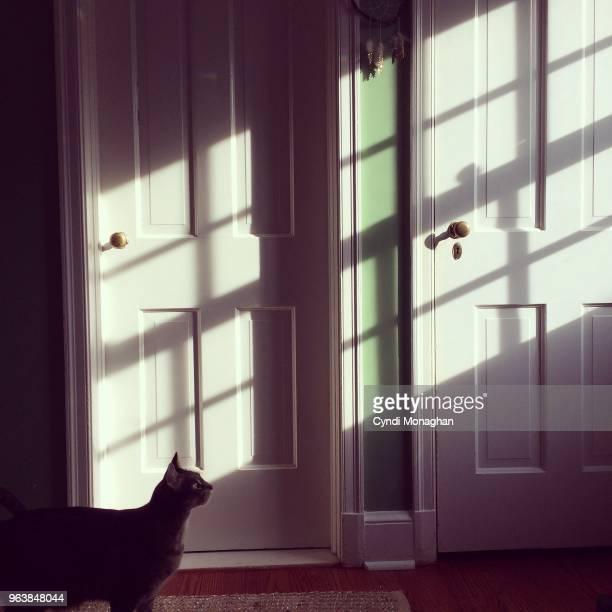 Cat Illuminated in Window Light