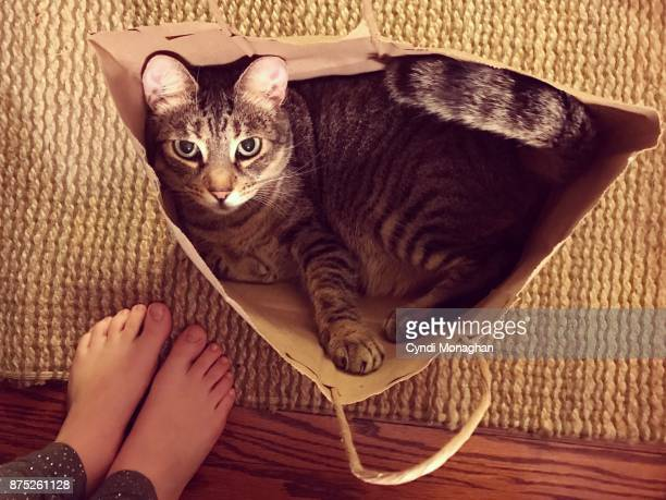 cat in a bag - naughty america stock pictures, royalty-free photos & images