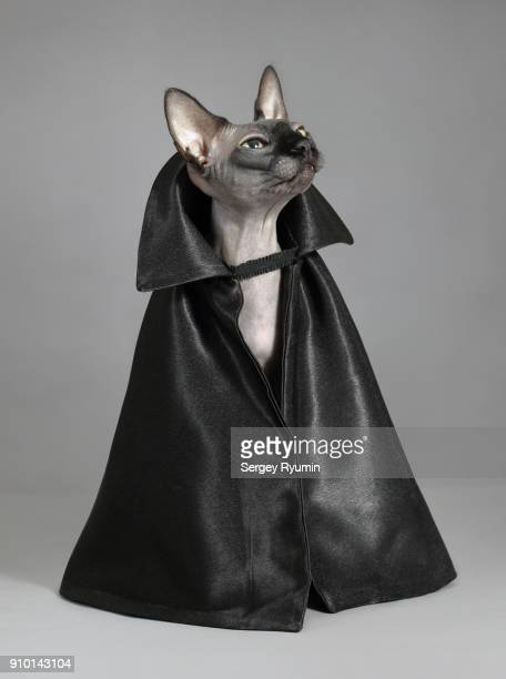 cat in a black cloak. - animal costume stock pictures, royalty-free photos & images