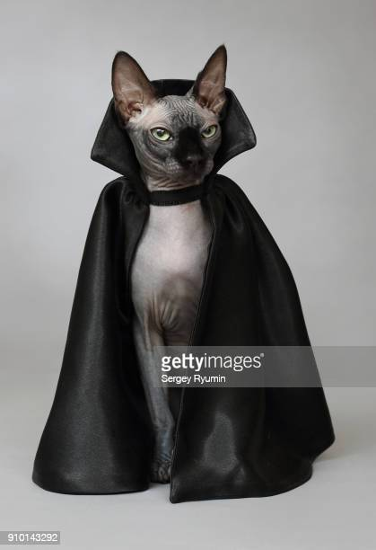 cat in a black cloak. - fashion oddities stock pictures, royalty-free photos & images