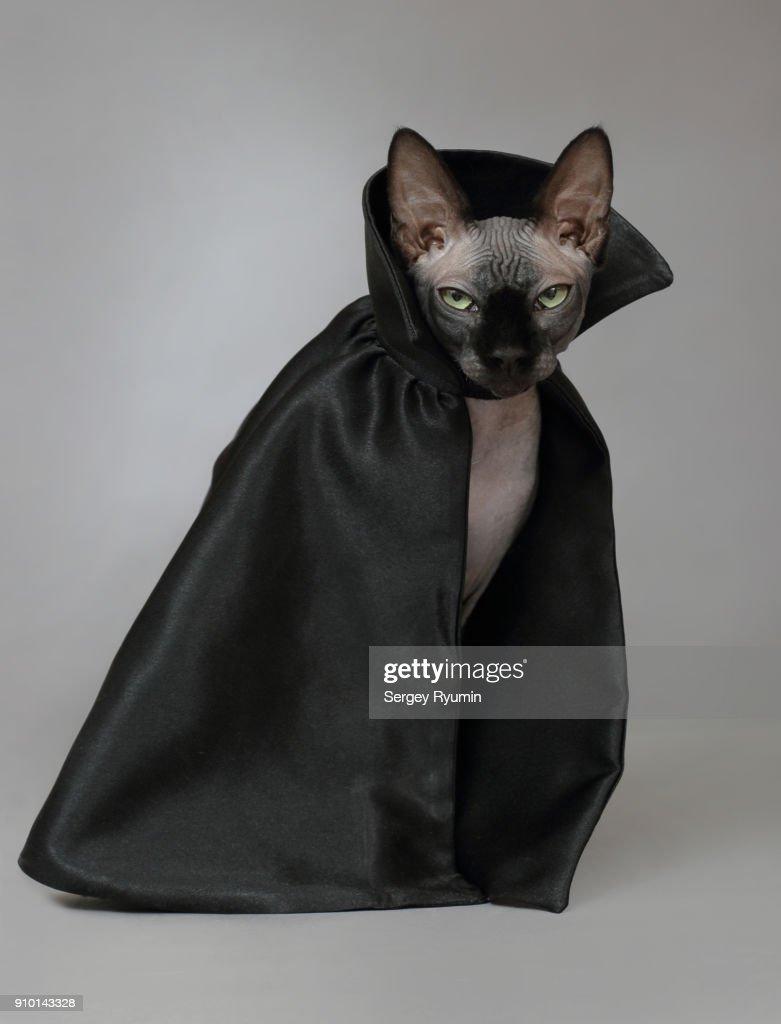 Cat in a black cloak. : Stock Photo