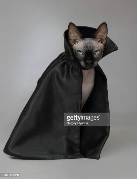cat in a black cloak. - descrever imagens e fotografias de stock