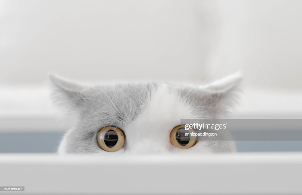 Cat in a box peeking out of a box : Stock Photo