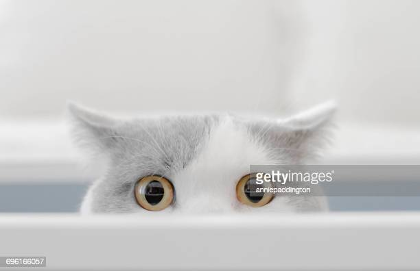 cat in a box peeking out of a box - funny animals stock pictures, royalty-free photos & images
