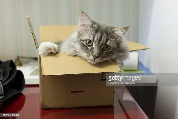 Cat in a brown cardboard box