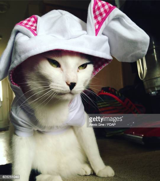 cat in a bunny costume - cat costume stock photos and pictures