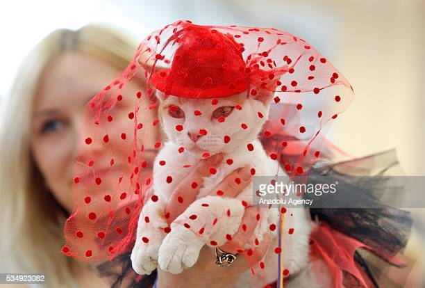 A cat in a costume is seen during a costume contest organized within the Cat Show Royal Feline in Kiev Ukraine May 28 2016 The exhibition presents...