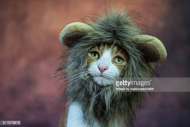 cat in a lion costume - lion feline stock pictures, royalty-free photos & images