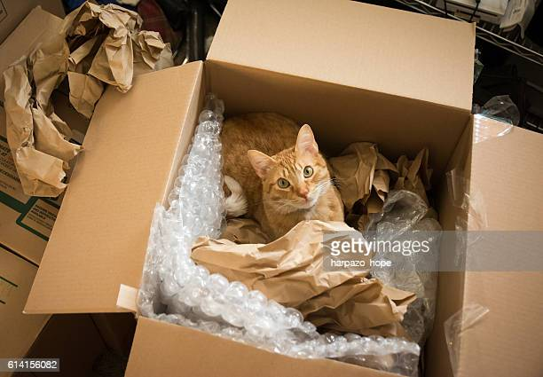 Cat in a moving box.