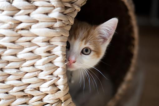Cat in a Pod 858282646