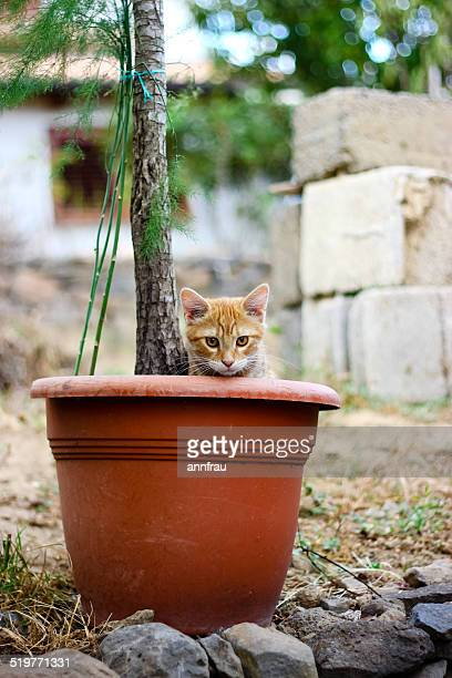 cat in a pot - annfrau stock pictures, royalty-free photos & images