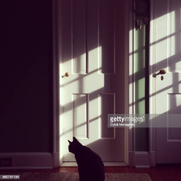 Cat in a Room