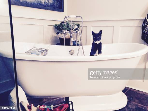 cat in bathtub at home - melodee devevo stock photos and pictures