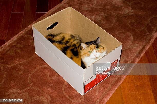 Cat in box, elevated view
