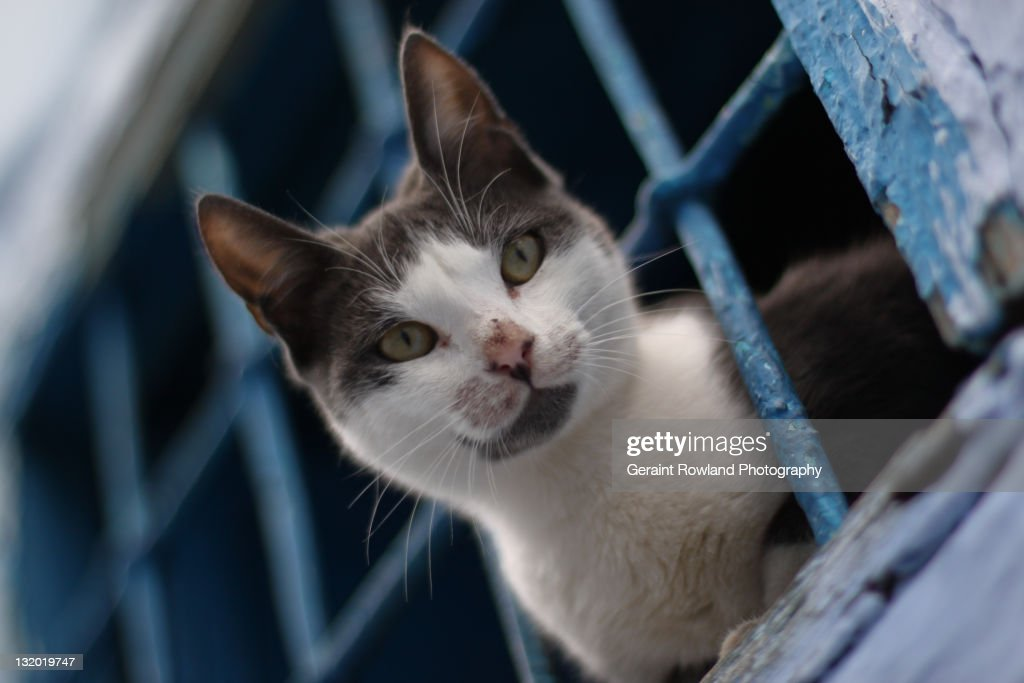 Cat in Cage, Chefchaouen, Morocco : Stock Photo