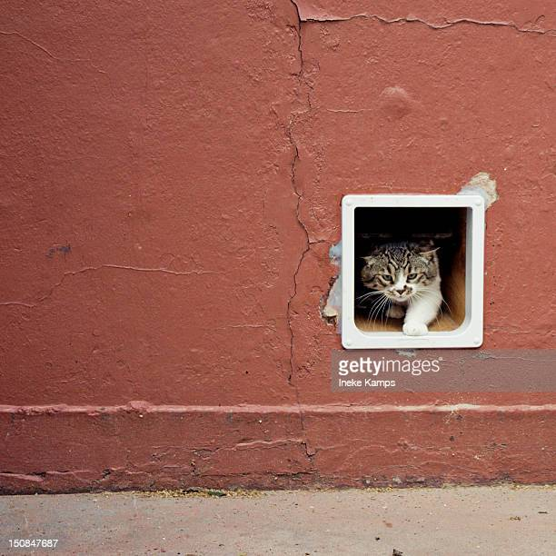 Cat in cat-flap