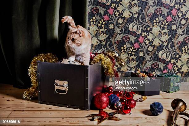 Cat in Christmas ornaments box