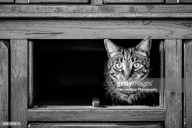 Cat in cubbyhole