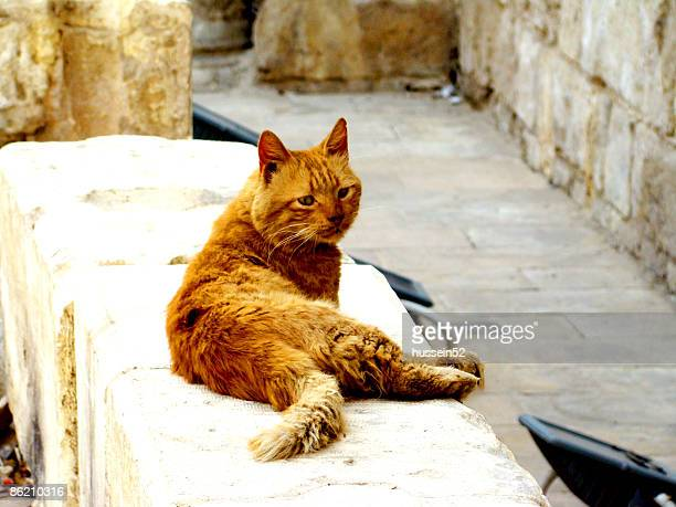 cat in elmoeez st. - hussein52 stock photos and pictures