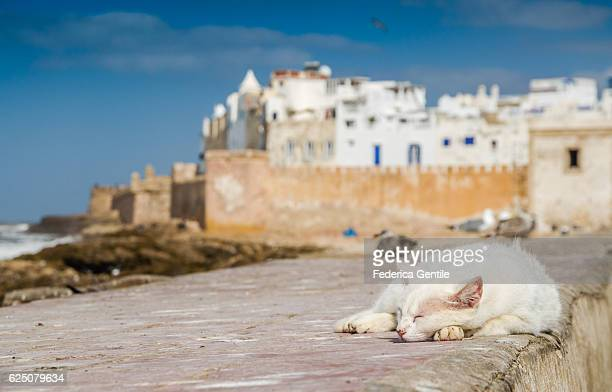 Cat in Essaouira