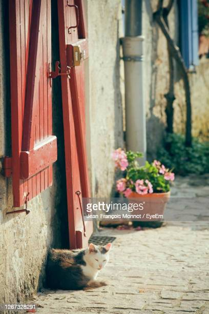 cat in front of a house - 2010 stock pictures, royalty-free photos & images