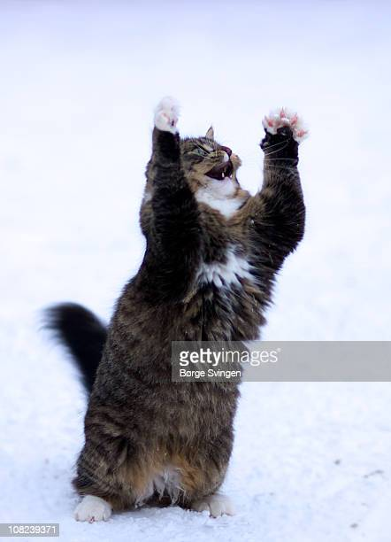 Cat in funny pose