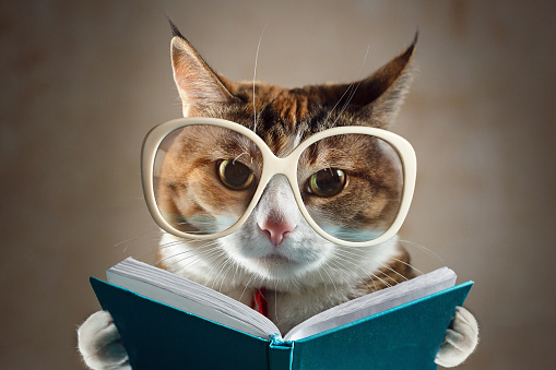 Cat in glasses holding a turquoise book and strictly looks into the camera. Concept of education 1125089587