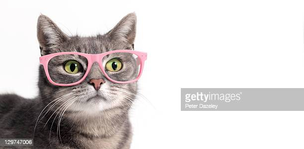 cat in glasses - funny cats photos et images de collection