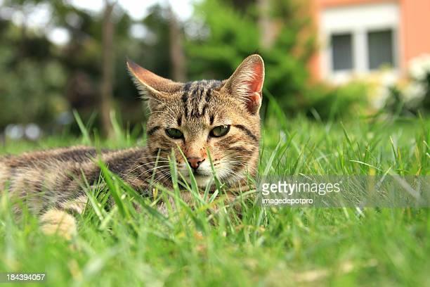 cat in green