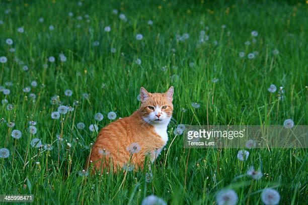 Cat in meadow