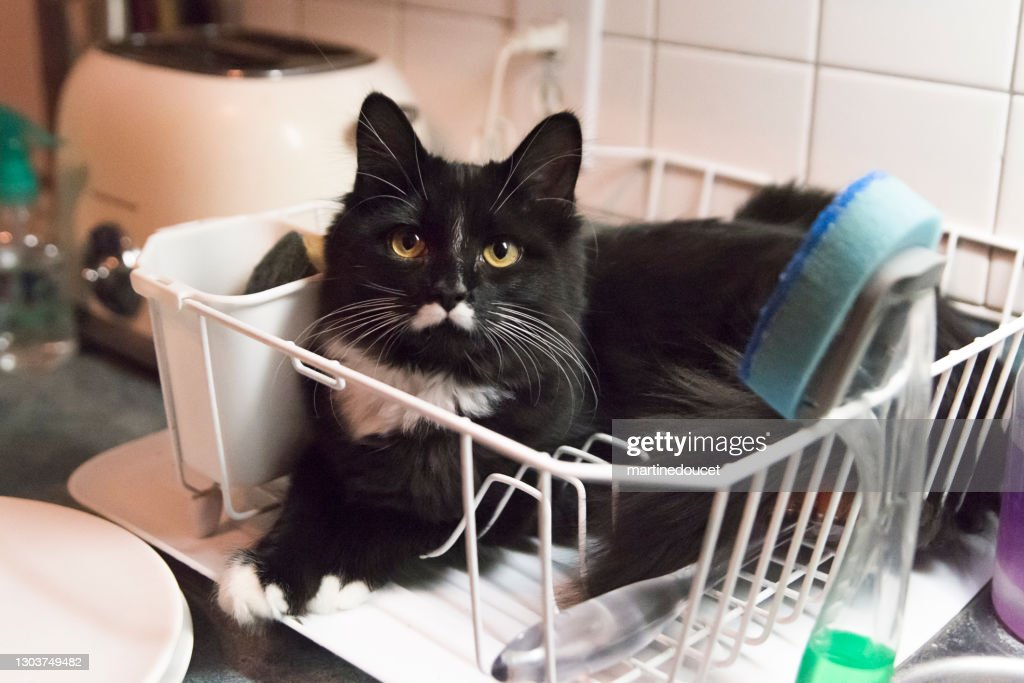 Cat in odd place resting in dish drainer rack. : Stock Photo