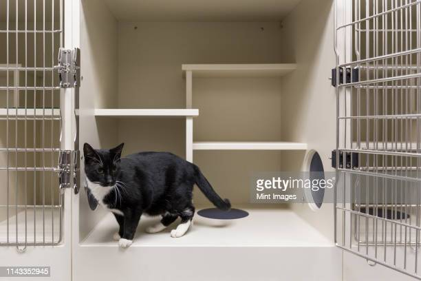 cat in open cage in animal shelter - humane society stock pictures, royalty-free photos & images