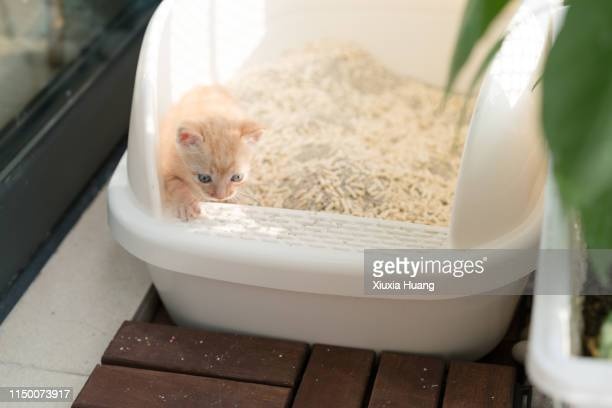 cat in plastic litter box - litter box stock photos and pictures