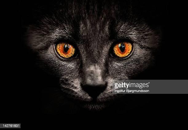 Cat in shadows.