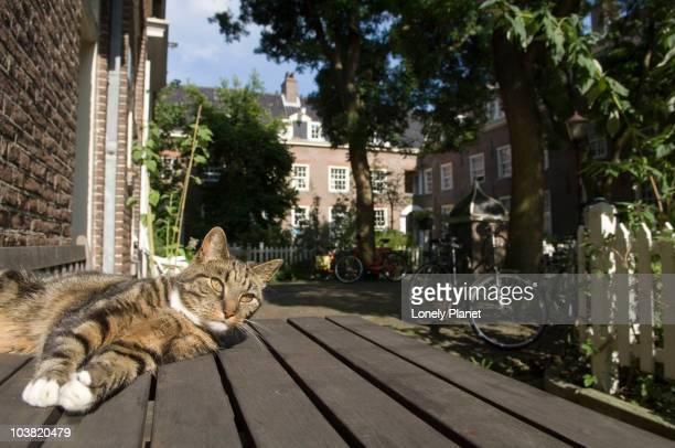 Cat in small inner courtyard Karthuizers Straat in the Jordaan area.