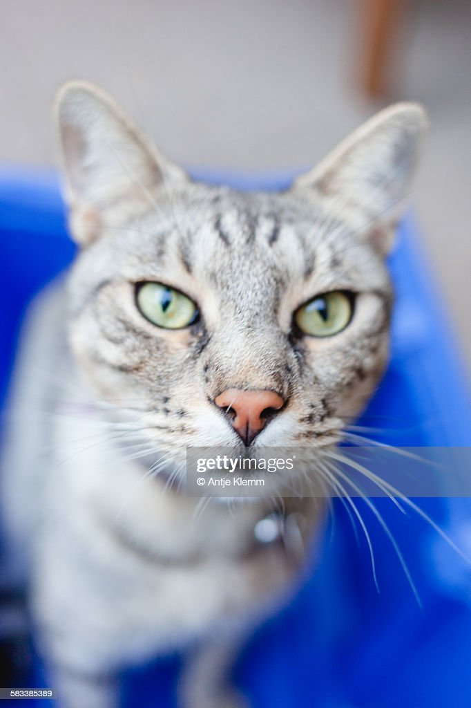 Cat in the blue box : Stock Photo
