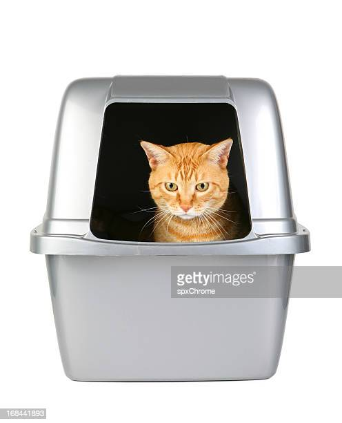 cat in the litter box - litter box stock photos and pictures