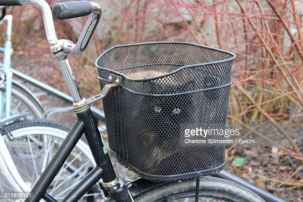 cat in the luggage rack of a bike. - luggage rack stock photos and pictures