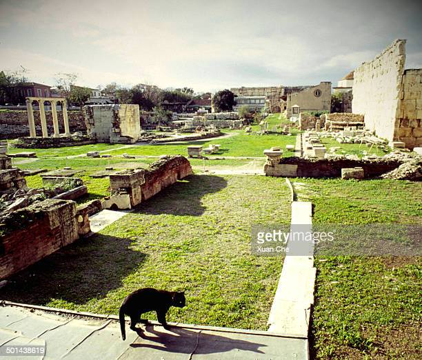 cat in the ruins of roman agora - xuan che stock pictures, royalty-free photos & images