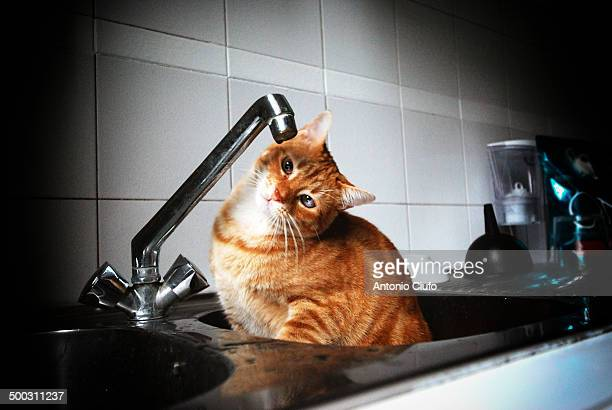 Cat in the sink waiting to drink water