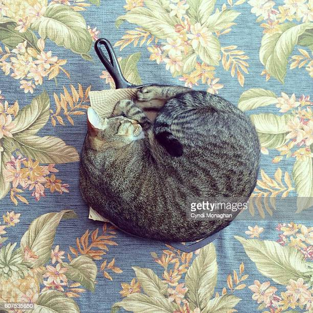 Cat in the Skillet