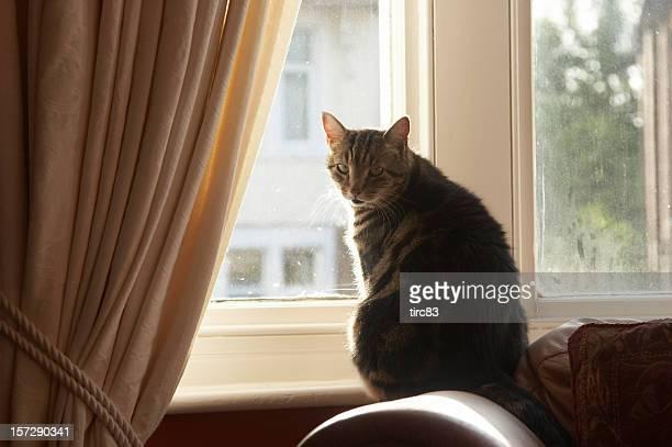 Cat in the window from inside