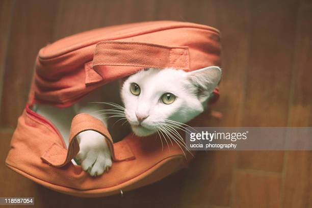 Cat inside bag